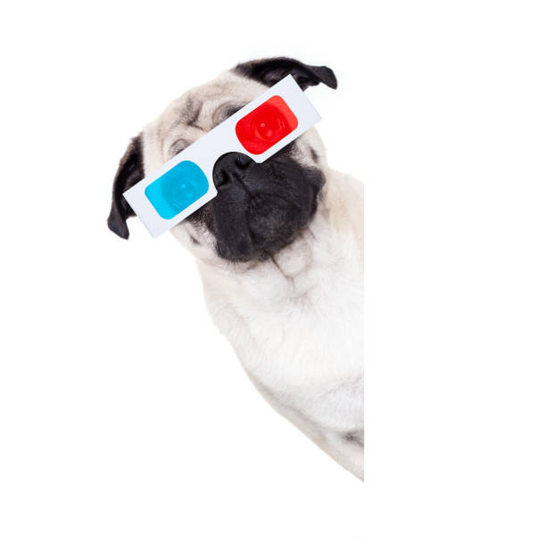 dog watching the  movies pug dog at cinema watching the  movies  with 3d glasses isolated behind  empty white background 3 d glasses stock pictures, royalty-free photos & images