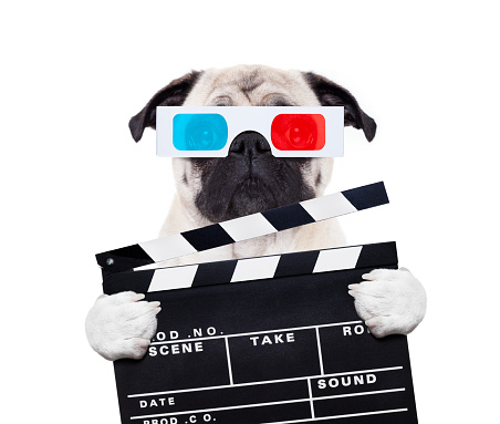 istock dog watching the  movies 867390168