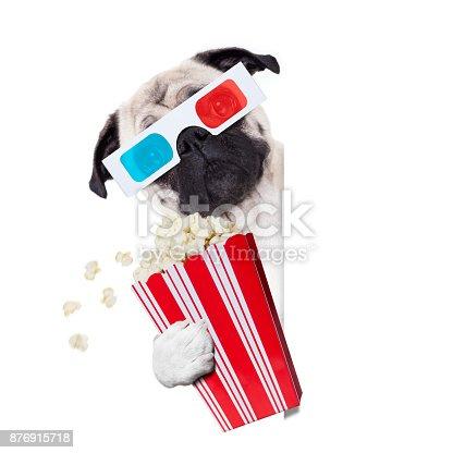 istock dog watching the  movies 876915718