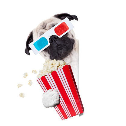 istock dog watching the  movies 876915718