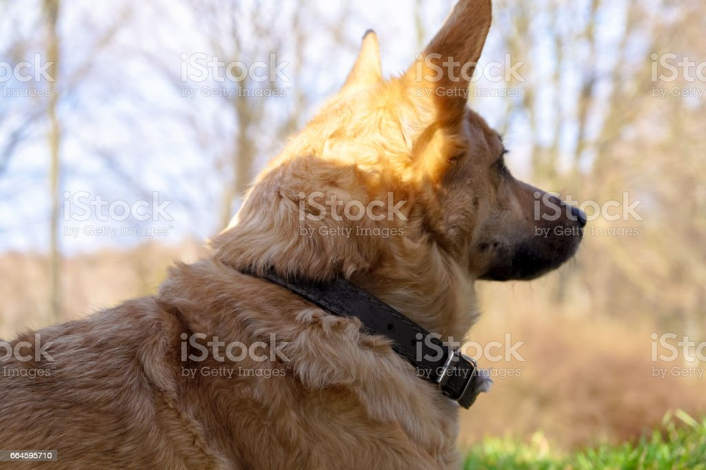 dog watching the world go by stock photo