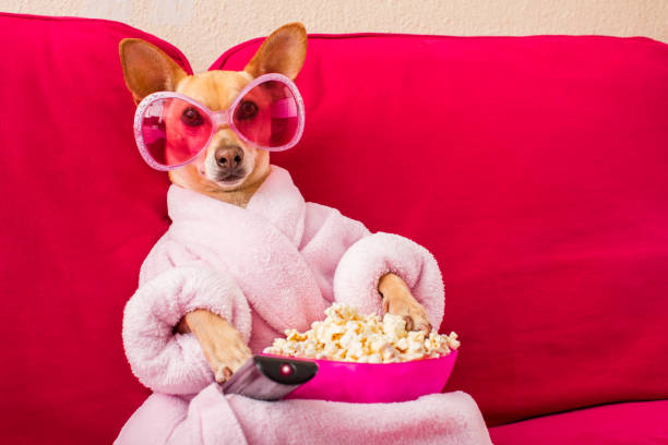 dog-watching-tv-on-the-couch-picture-id6