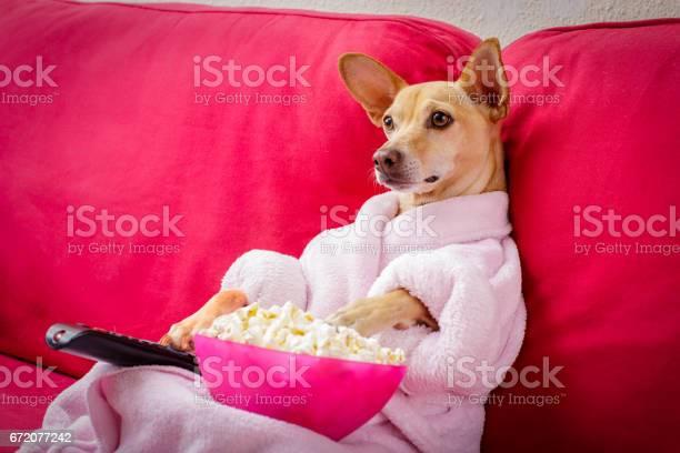 Dog watching tv on the couch picture id672077242?b=1&k=6&m=672077242&s=612x612&h=sn5 zkoxxwruxogbbhsgb7pcymloza3nqgiiy1lyuae=