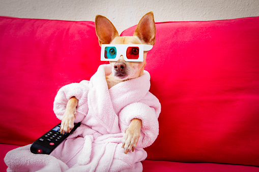 istock dog watching tv on the couch 672077338