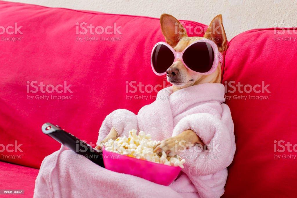 cão assistindo tv no sofá foto de stock royalty-free