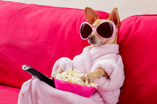 dog watching tv on the couch - humor stock photos and pictures