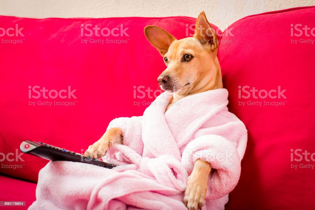 Hund vor dem Fernseher auf der couch - Lizenzfrei Aufführung Stock-Foto