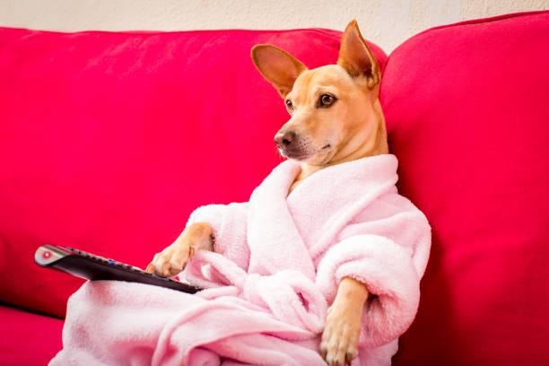 hund vor dem fernseher auf der couch - film oder fernsehvorführung stock-fotos und bilder