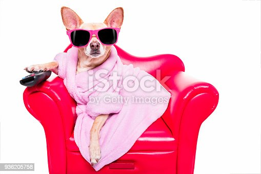 istock dog watching tv on the couch 936205758