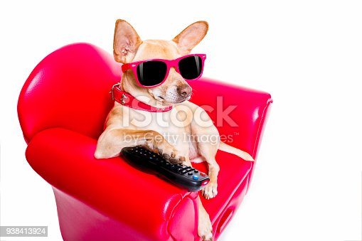 istock dog watching tv on the couch 938413924