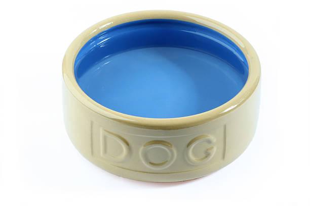 Dog water stock photo