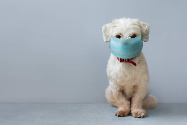 Hund trägt eine Gesichtsmaske – Foto