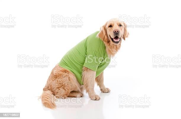 Dog wearing a green tshirt picture id182719802?b=1&k=6&m=182719802&s=612x612&h=9vi8i9aoikwbd2apb0m5cs3mvpefbs 4ozsq2jllq5u=