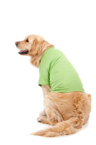 Dog Wearing A Green T-Shirt