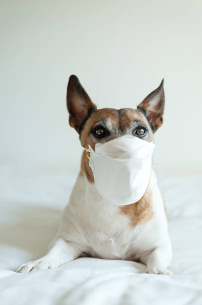 Dog wearing a mask stock photo