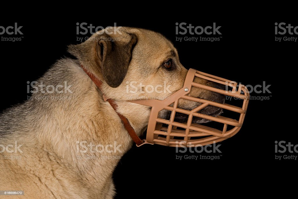 Dog wearing a plastic basket dog muzzle stock photo