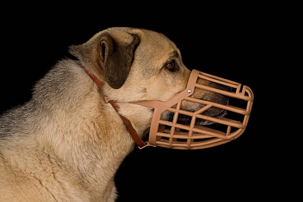 Dog wearing a plastic basket dog muzzle Profile of a crossbreed dog wearing a plastic basket dog muzzle.  snout stock pictures, royalty-free photos & images
