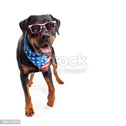 istock Dog Wearing American Flag Accessories 584212642