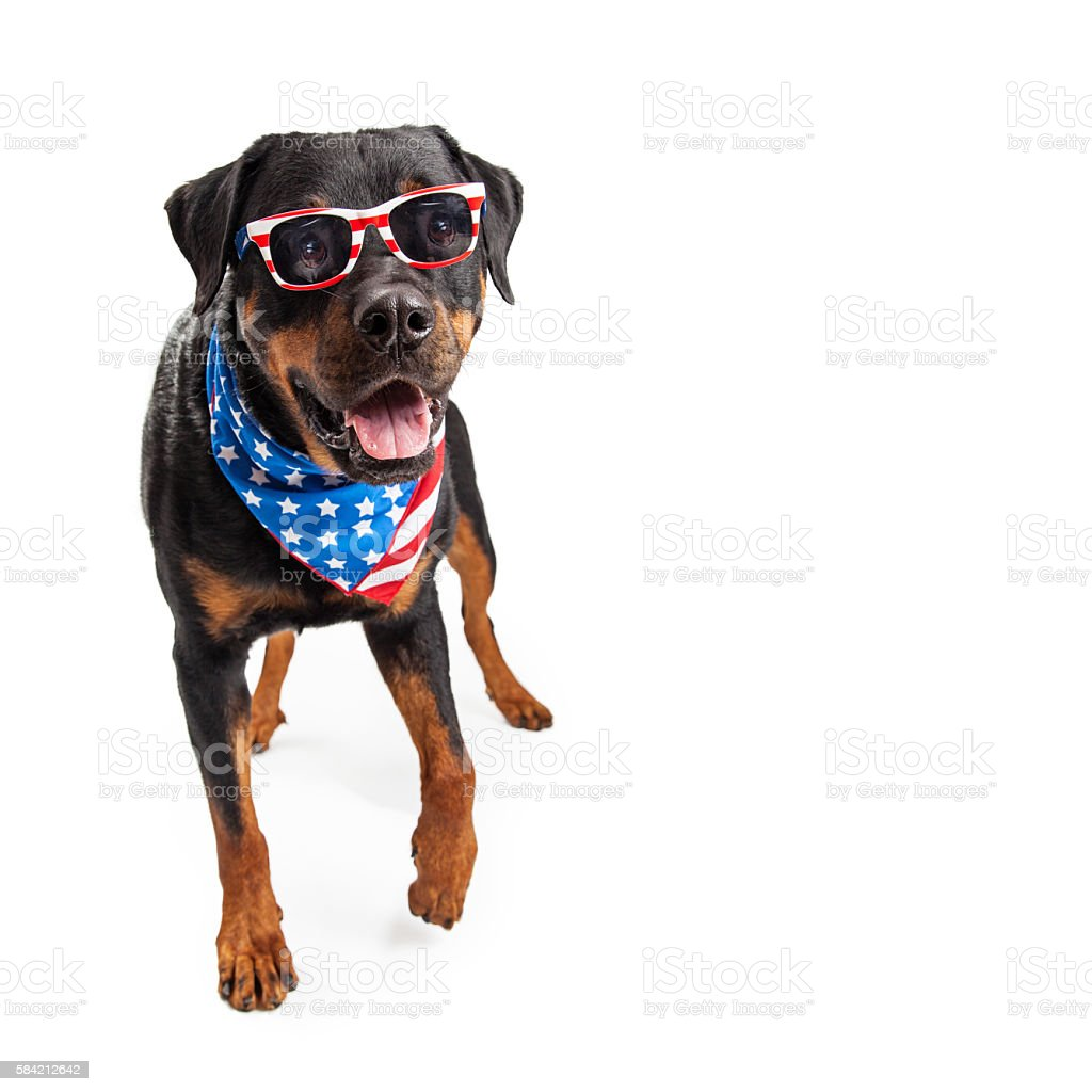 Dog Wearing American Flag Accessories stock photo