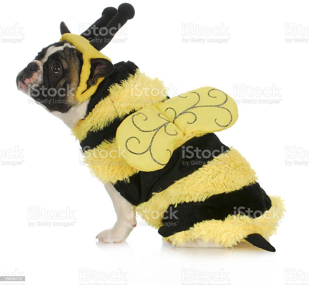 dog wearing bee costume stock photo