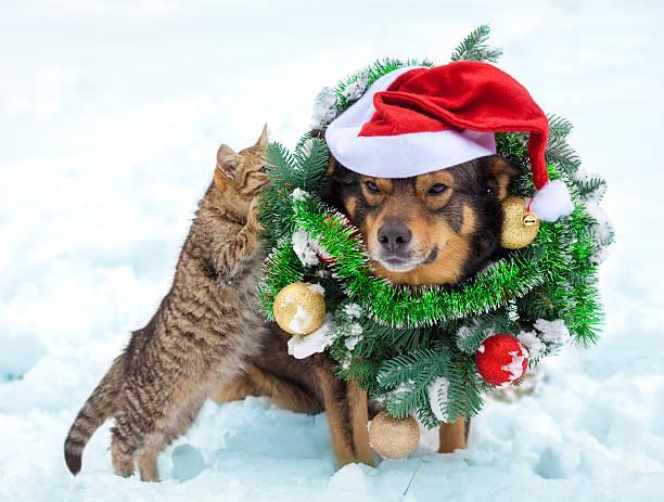 dog wearing christmas wreath and santa hat sitting with kitten - katze weihnachten stock-fotos und bilder
