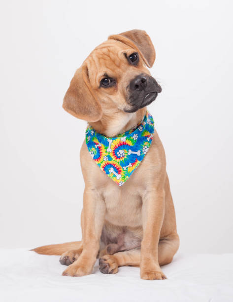 Dog Wearing Colorful Bandana stock photo