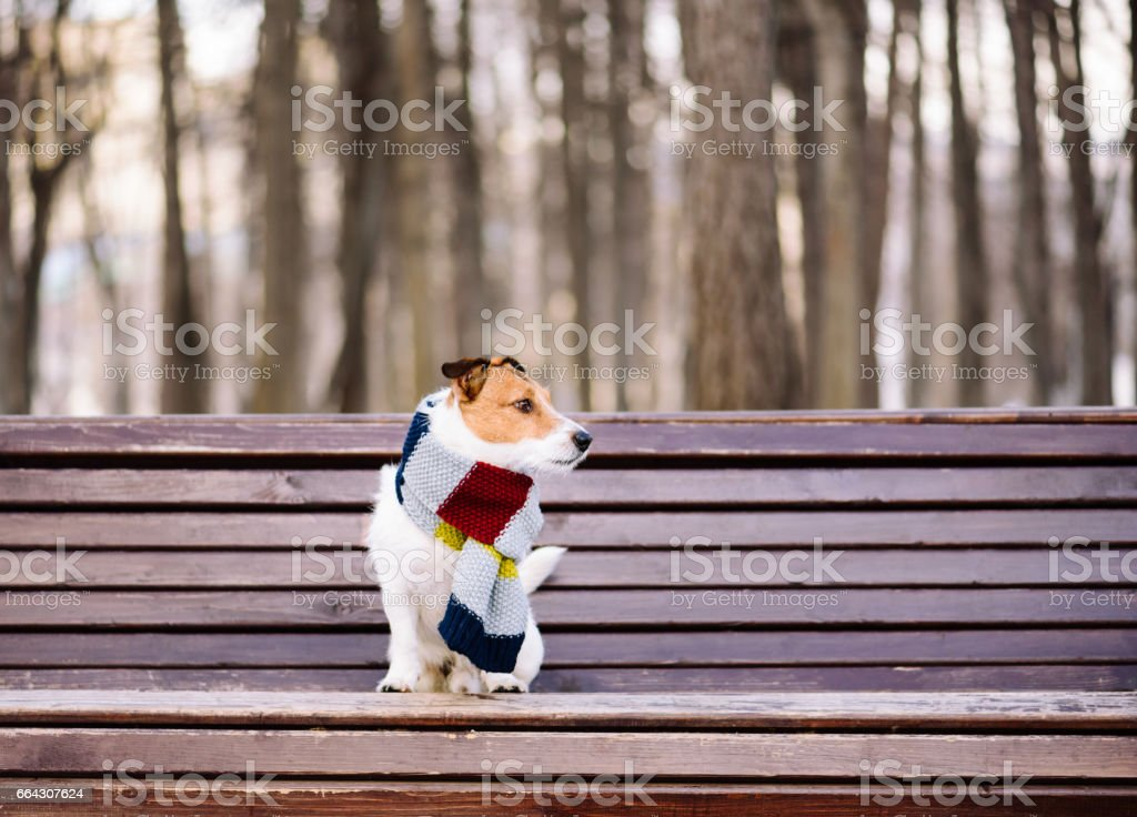 Dog wearing cozy warm scarf sitting on bench at park stock photo