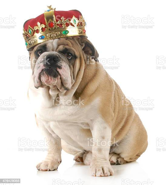 Dog wearing crown picture id476429055?b=1&k=6&m=476429055&s=612x612&h=p8npljm4jlwazkqnbb6rzghj245aiqiptdwh0ic9el8=