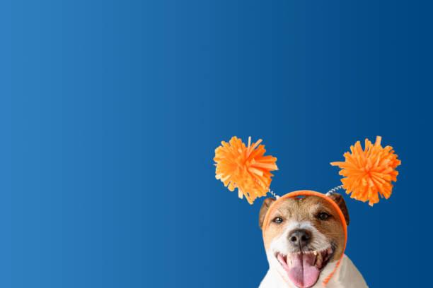Hond die grappige feestelijke hoofdband met pompons draagt die vakantie vieren foto