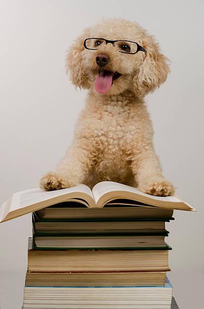 Image result for dog teacher