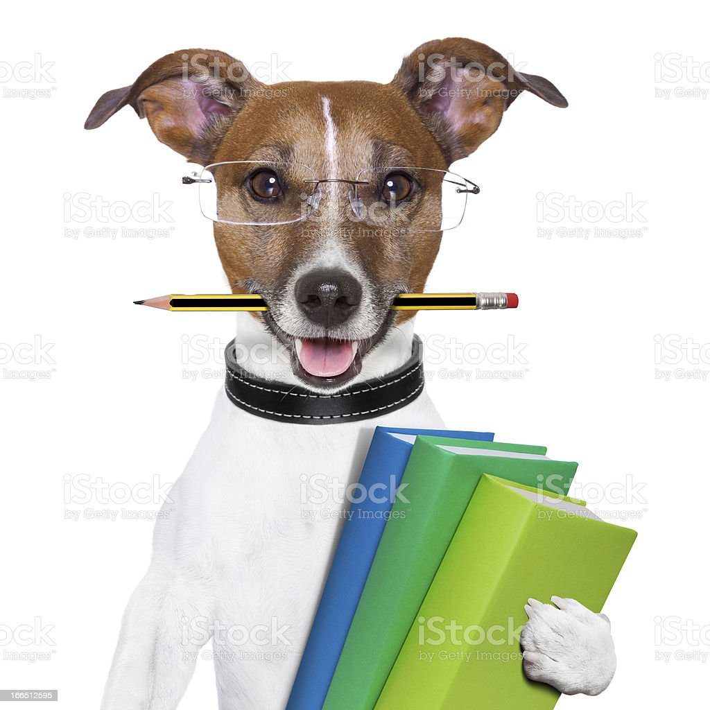 Dog wearing glasses holding books with a pencil in its mouth stock photo