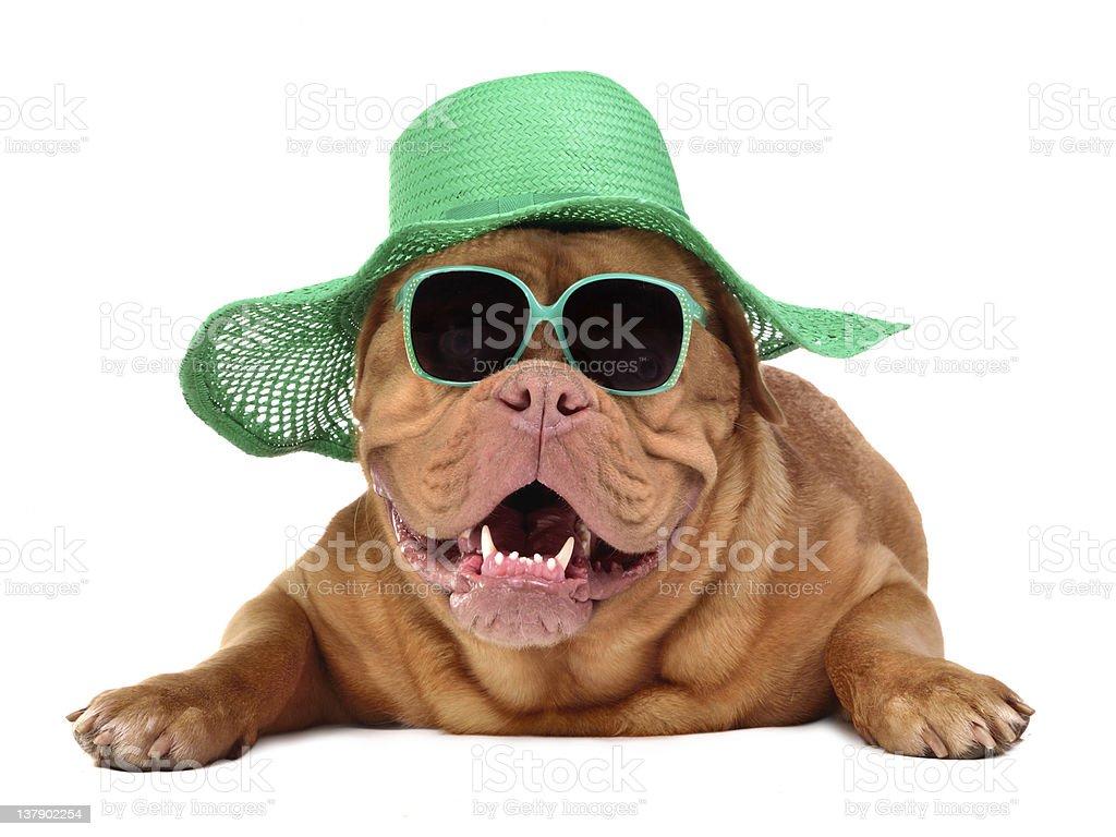 Cão vestindo verde chapéu de palha e óculos de sol foto royalty-free 96385a960d
