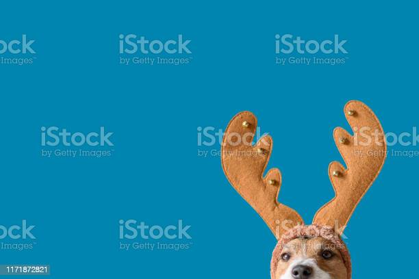 Dog wearing headband with christmas reindeer antlers against solid picture id1171872821?b=1&k=6&m=1171872821&s=612x612&h=ll 2r phzzz8dsavpsjvld2o9uel 3wqrayhgcts6g0=
