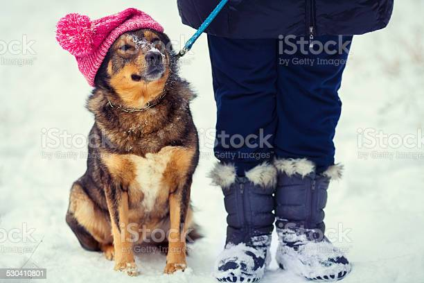Dog wearing knee hat with pompom walking with owner outdoor picture id530410801?b=1&k=6&m=530410801&s=612x612&h=eqhgcfferncadn  yla5rue05kpqjlb7klmmy1on5uy=