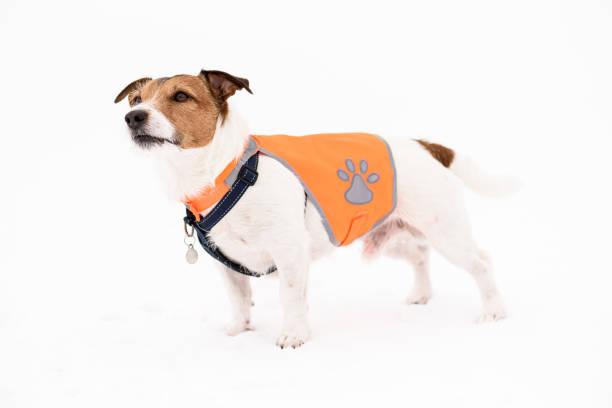 Hond dragen Pet veiligheid reflecterende vest staande op witte sneeuw foto