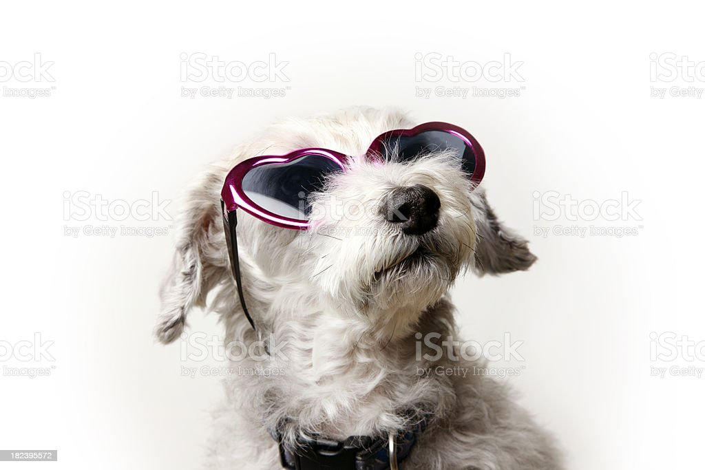 Dog Wearing Pink Heart-Shaped Sunglasses royalty-free stock photo