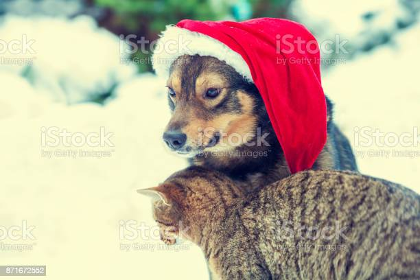 Dog wearing santa hat sitting with kitten outdoors in snow picture id871672552?b=1&k=6&m=871672552&s=612x612&h=dnerrytyfnzxwql9aygafewet2mn9aw81bc lfv3cim=