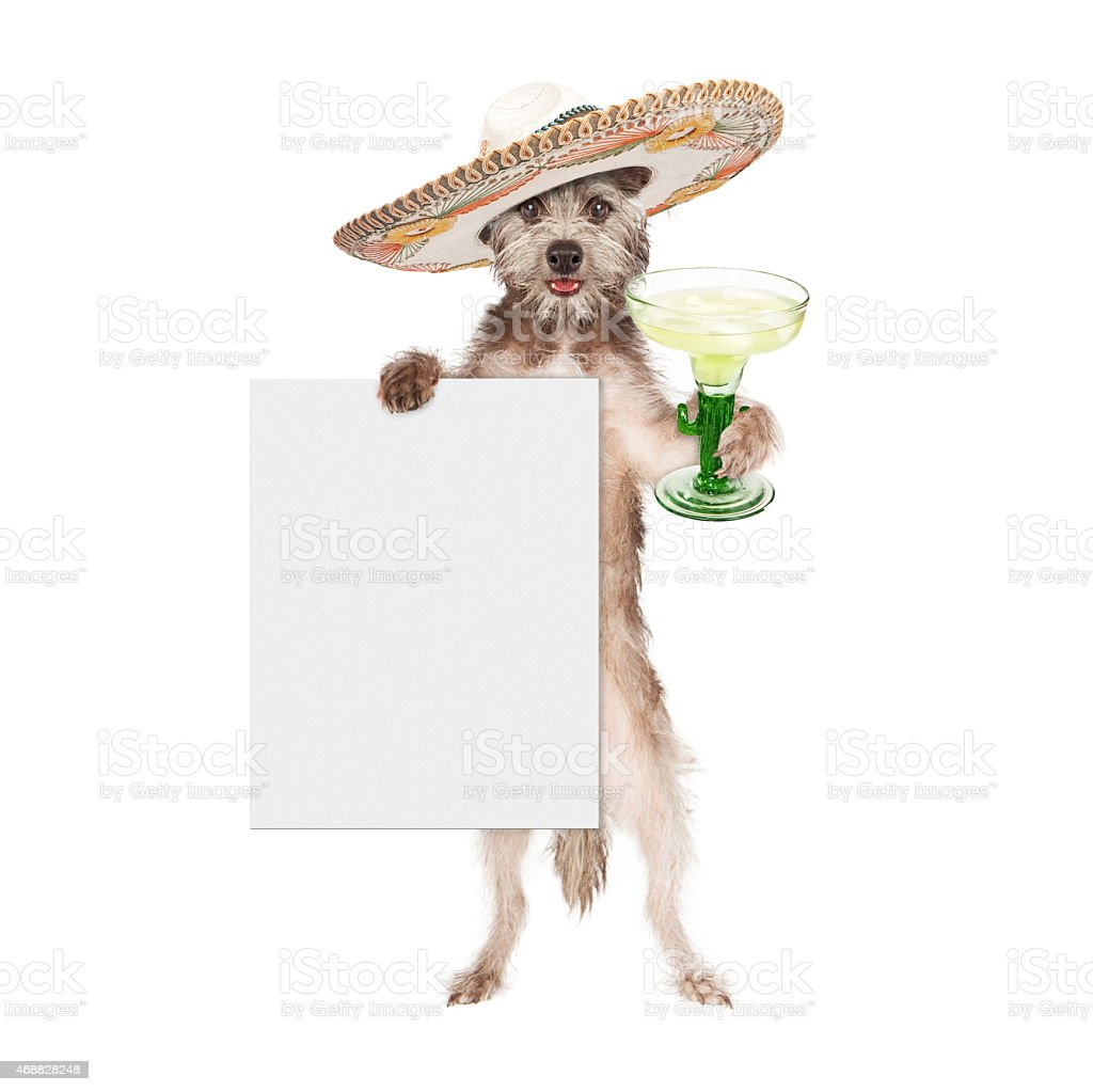 Dog Wearing Sombrero Holding Margarita and Sign stock photo