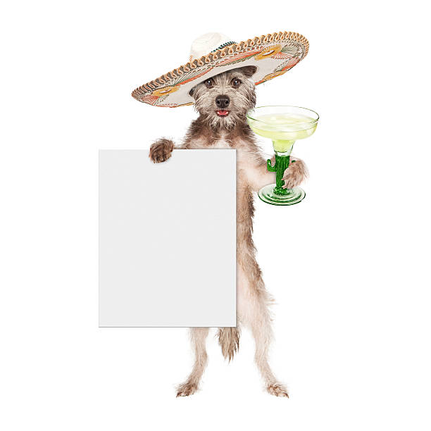 dog wearing sombrero holding margarita and sign - cinco de mayo stock photos and pictures