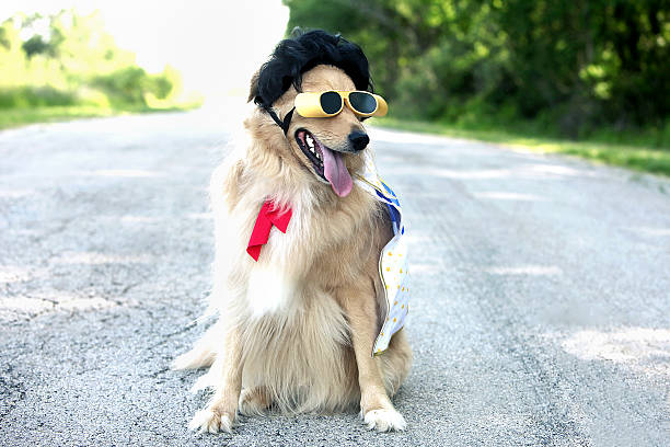 dog wearing sunglasses and elvis wig - elvis stock photos and pictures