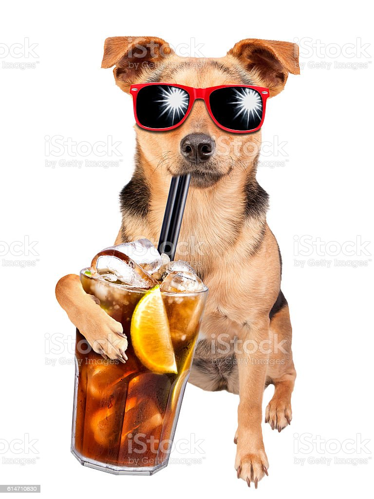 Dog wearing sunglasses drinking cuba libre cocktail isolated stock photo