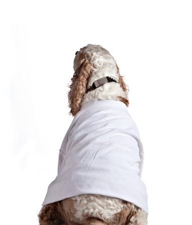 Dog Wearing White T-Shirt