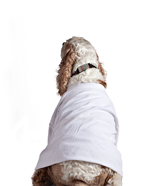 Dog wearing white tshirt picture id182488426?b=1&k=6&m=182488426&s=612x612&w=0&h=58w41fu tmj7ycv7fyx7aw ofqsxp4q0kcb52wjvxr8=