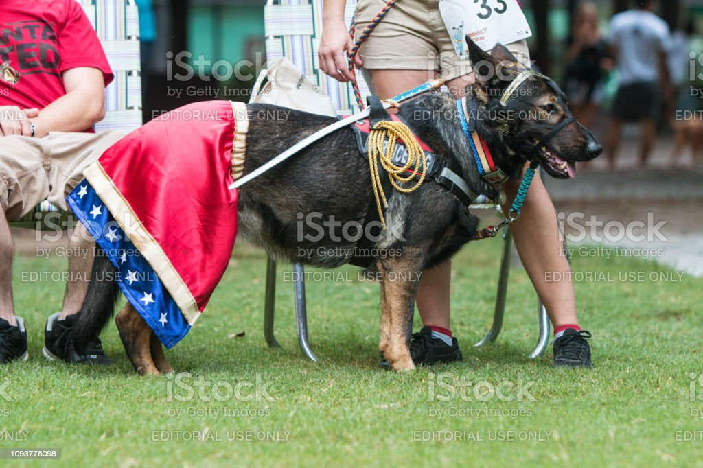 Dog Wears Wonder Woman Costume At Atlanta Doggy Con Event Stock Photo Download Image Now Istock