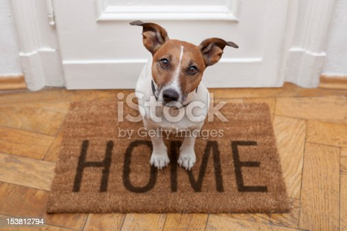 istock dog welcome home 153812794