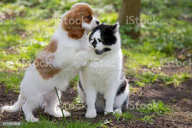 Dog whispering in cats ear picture id471454859?b=1&k=6&m=471454859&s=612x612&h=tdm24mclpwptb7jccnucccwq9jyd dyjltcplg7fwwm=