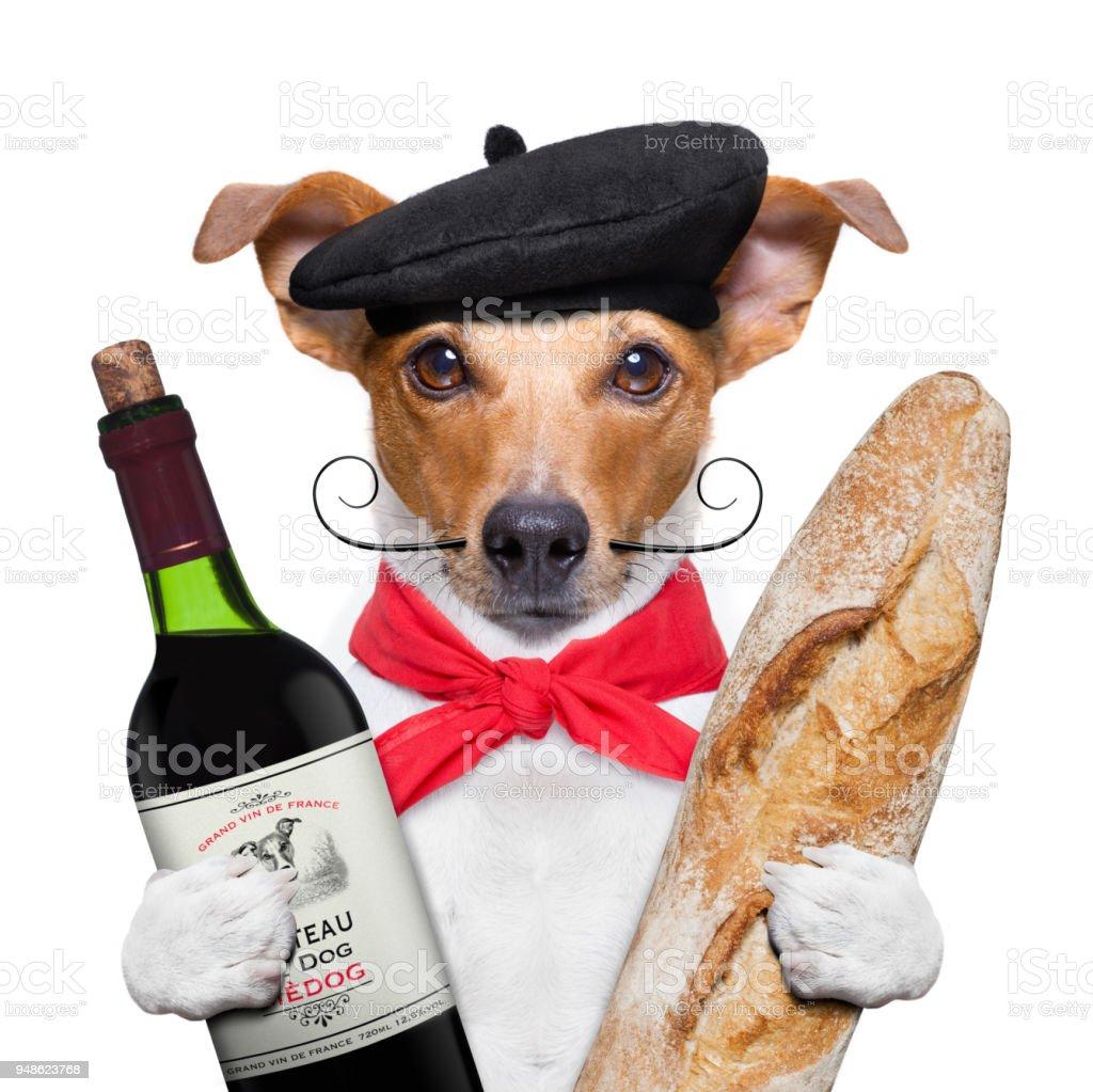 dog  wine baguette beret stock photo