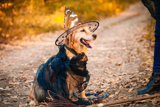 Dog witch for halloween picture id1181914720?b=1&k=6&m=1181914720&s=612x612&w=0&h=bevvxatlruvj6zmk 8fqmha4fofcv83501xbogexopg=