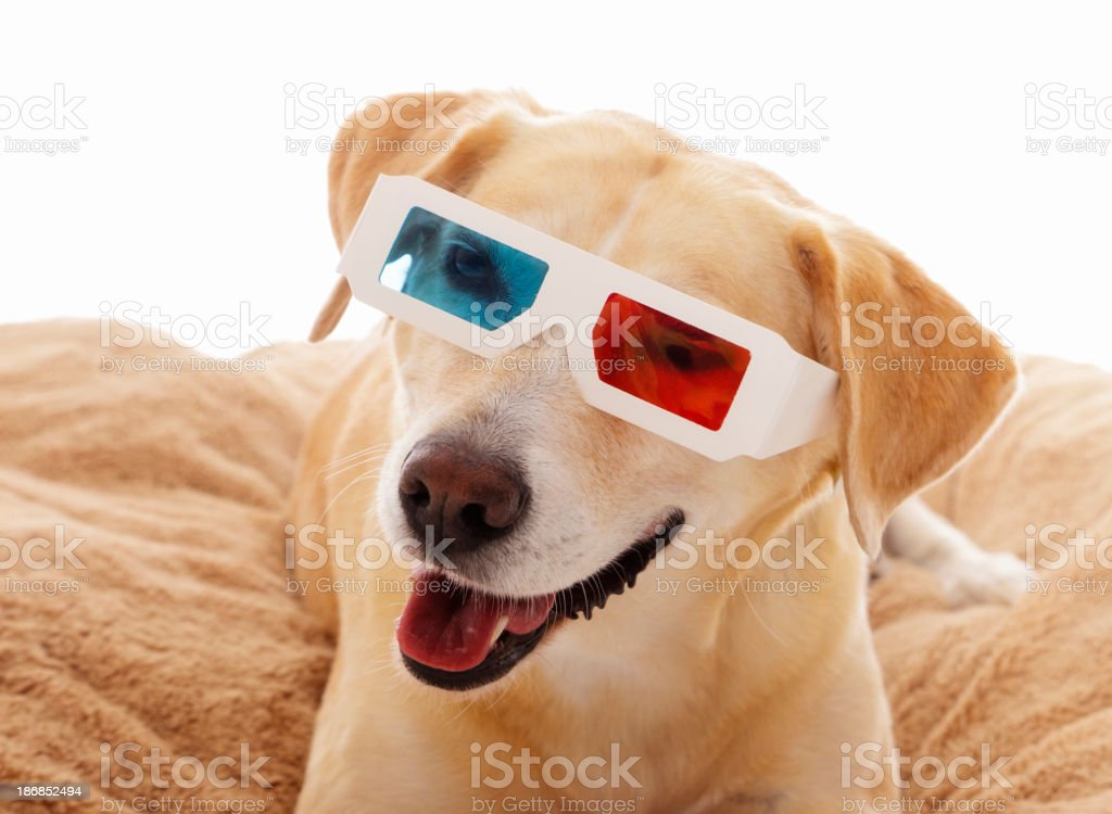 Dog with 3D Glasses stock photo