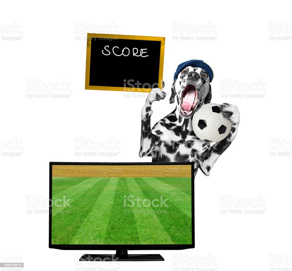 Dog with a ball fan football championship royalty-free stock photo
